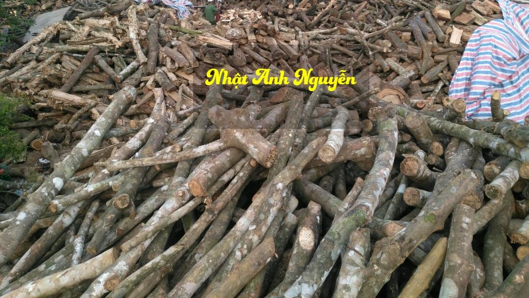 Củi gỗ tạp rừng số lượng lớn
