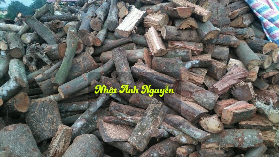 Củi gỗ tạp rừng bổ